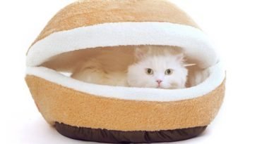 61bcLib6elL. SL1169 364x205 - 24 Affordable Products You Didn't Know You Needed For YOUR CAT! + Reviews